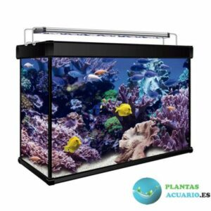 kit acuario betta 7