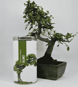 kit cultivo hierbas aromaticas 6
