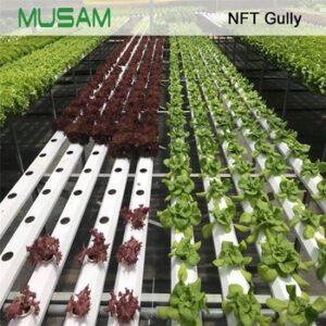 kit cultivo hierbas aromaticas 2